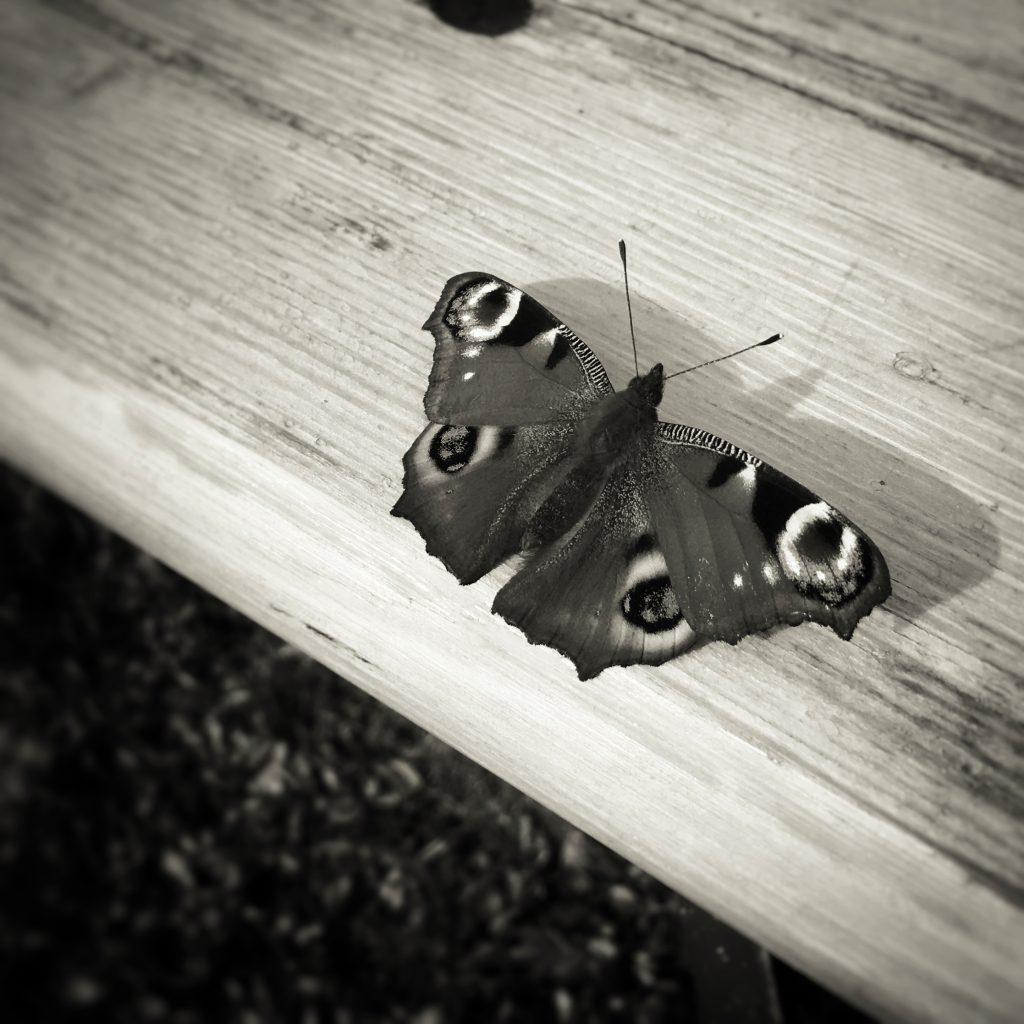 Schmetterling im Tai Chi Camp in Polen